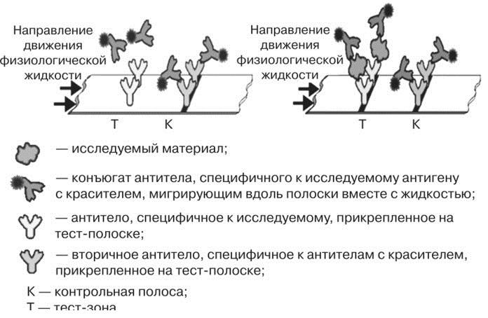 Укладка иммунохроматографических индикаторных элементов «УИХЭ-1»